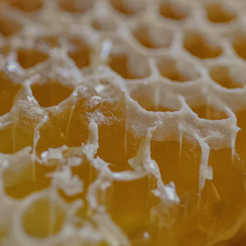 beeswax absolute 1